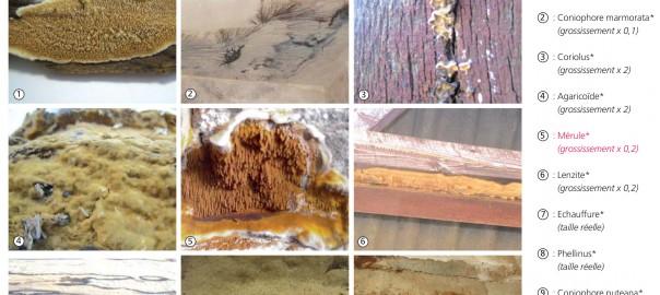 """extrait du guide """"prévention et lutte contre les mérules dans l'habitat"""" édité par l'ANAH."""