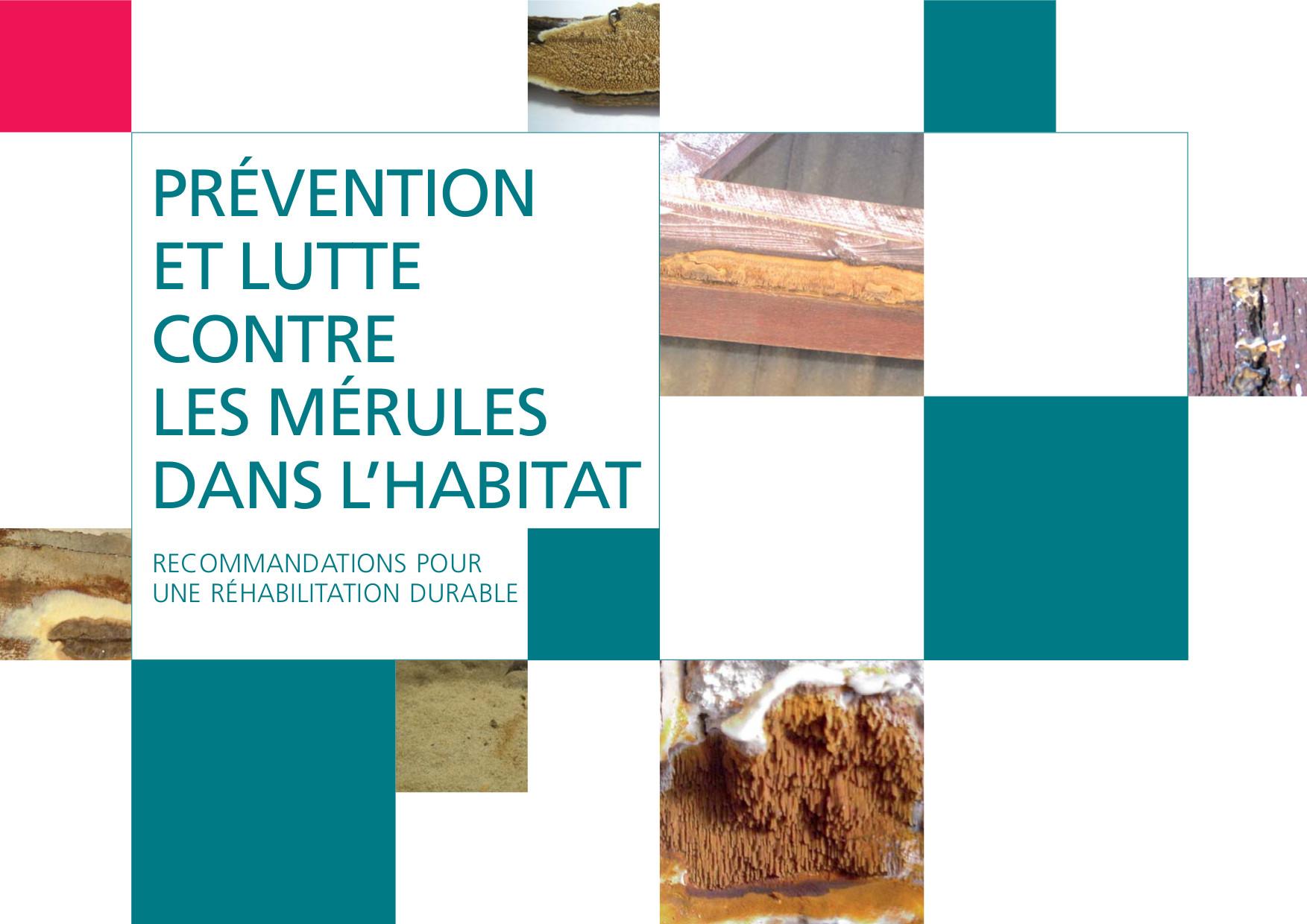 prévention et lutte contre les mérules dans l'habitat